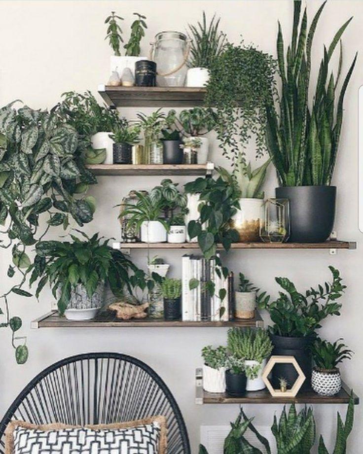 Plantes vertes pour le salon